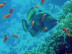I pesciolini chiedono: cos'è l'acqua? | http://ilcantico.fratejacopa.net