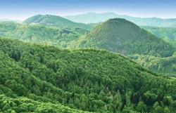 Speciale Scuola di Pace: Scoto e l'ecologia | http://ilcantico.fratejacopa.net